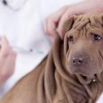 Vaccinazioni del cane
